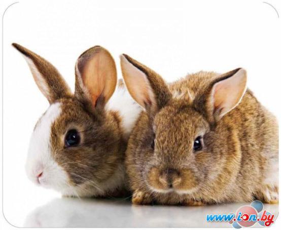Коврик для мыши Buro BA01-10 Кролики в Могилёве
